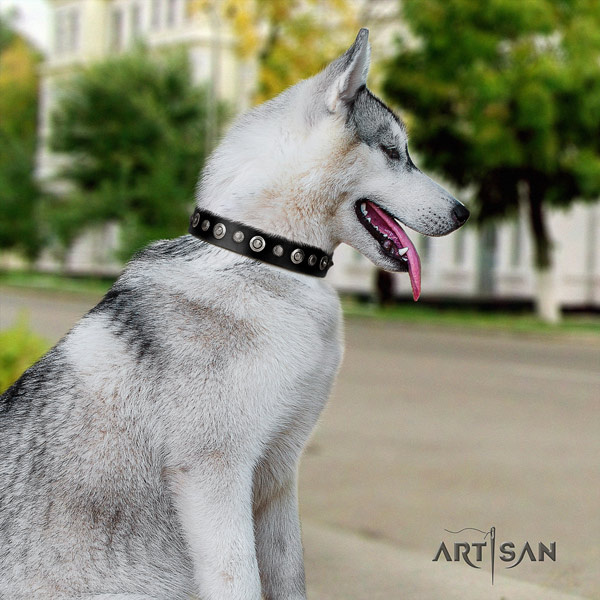 Siberian Husky inimitable studded natural leather dog collar for daily walking