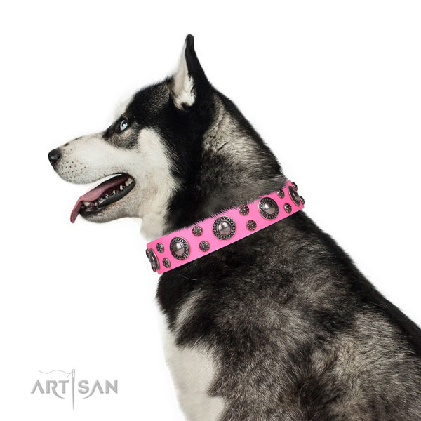 Siberian Husky leather collar with strong D-ring for everyday use