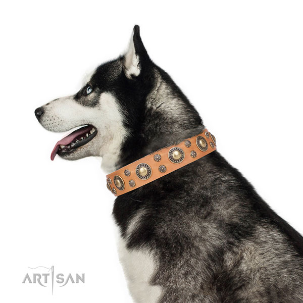 Siberian Husky full grain natural leather collar with reliable D-ring for walking