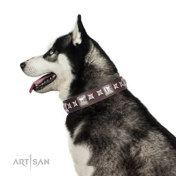 Siberian Husky leather collar with reliable hardware for fancy walking