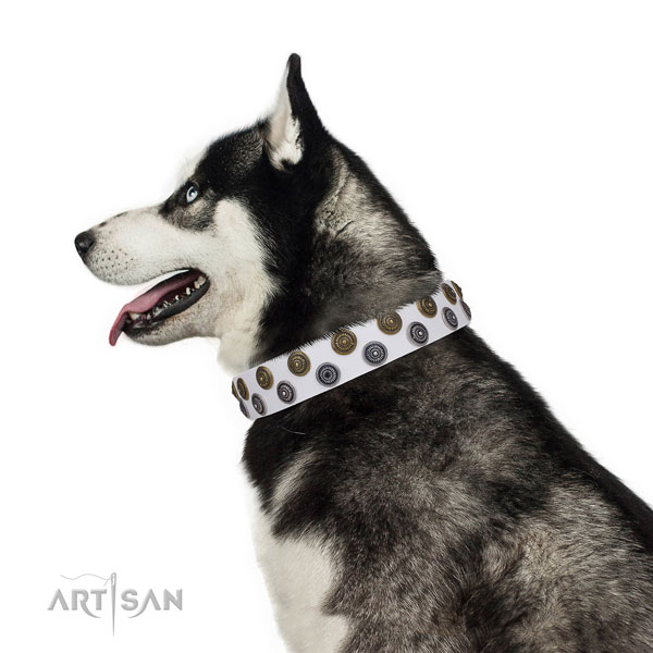 Siberian Husky full grain genuine leather collar with durable D-ring for easy wearing