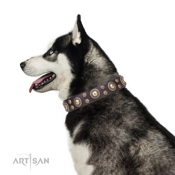 Siberian Husky full grain genuine leather collar with strong D-ring for comfortable wearing