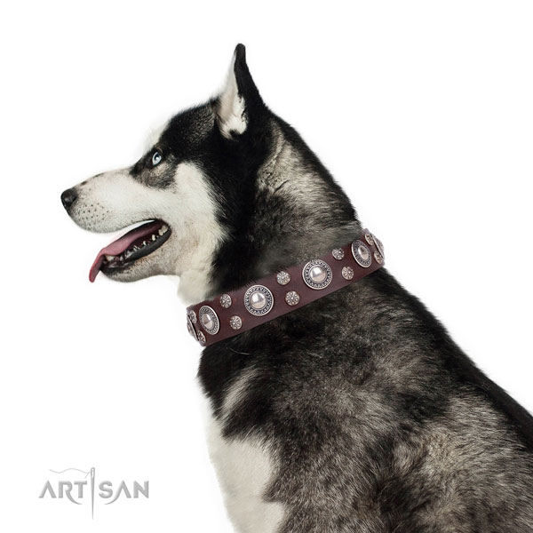 Siberian Husky full grain genuine leather collar with corrosion proof hardware for daily use