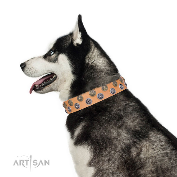 Siberian Husky full grain natural leather collar with strong fittings for everyday walking