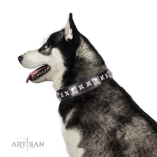 Siberian Husky full grain leather collar with rust-proof D-ring for walking