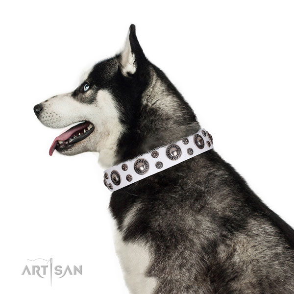 Siberian Husky leather collar with strong hardware for everyday use