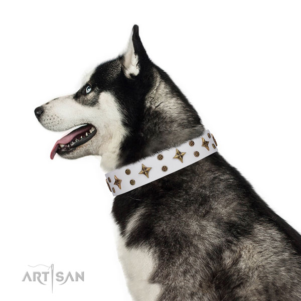 Siberian Husky full grain genuine leather collar with rust-proof fittings for easy wearing