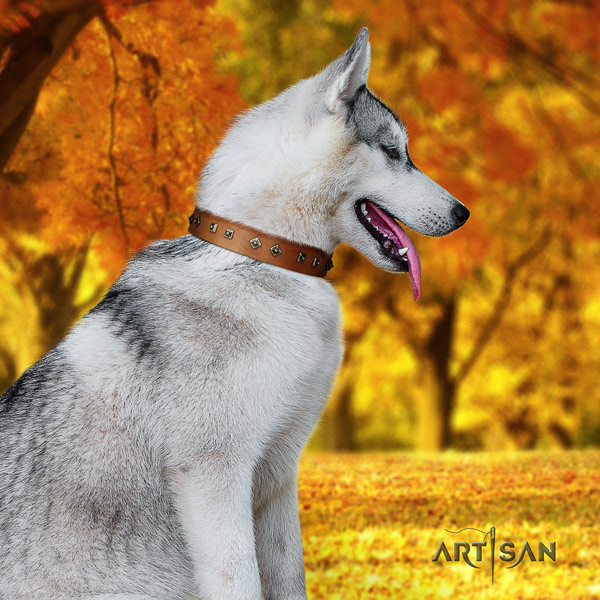 Siberian Husky impressive embellished natural genuine leather dog collar
