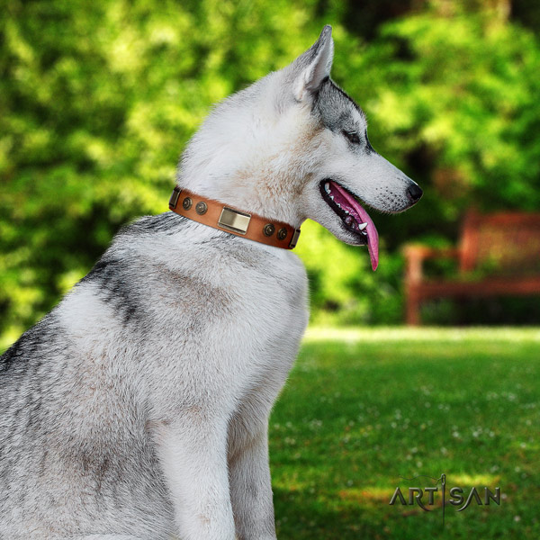 Siberian Husky incredible decorated leather dog collar