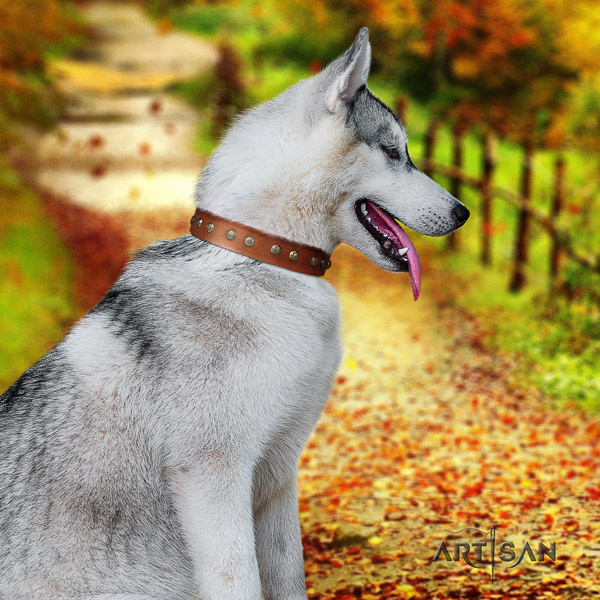 Siberian Husky exceptional decorated leather dog collar