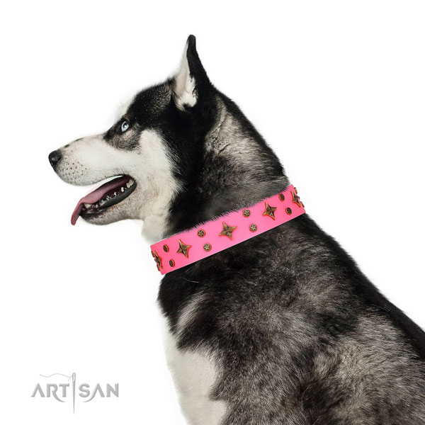 Siberian Husky full grain natural leather collar with corrosion resistant D-ring for walking