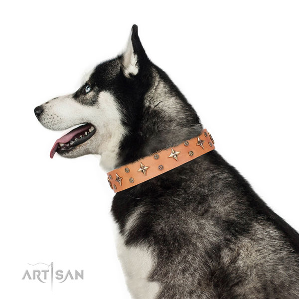Siberian Husky full grain leather collar with reliable D-ring for comfy wearing