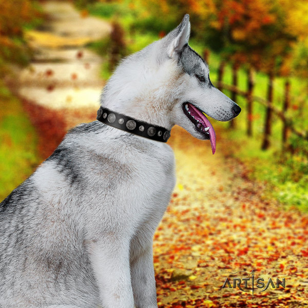 Siberian Husky awesome decorated full grain natural leather dog collar for comfortable wearing
