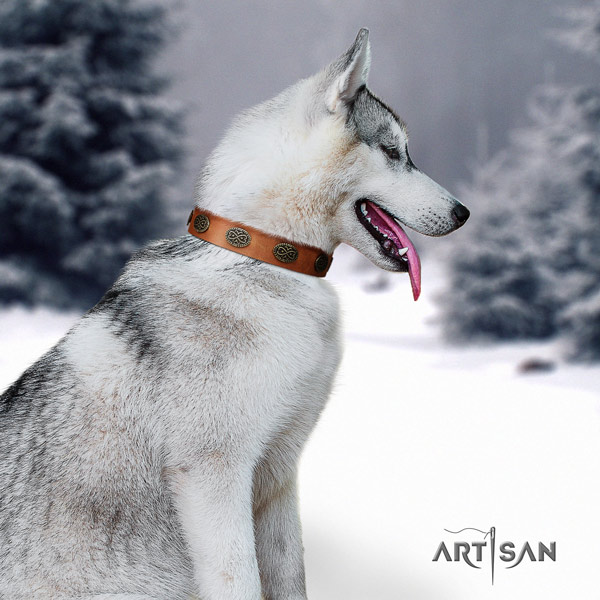 Siberian Husky fashionable embellished full grain leather dog collar
