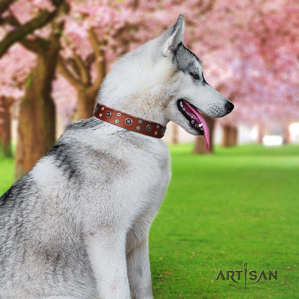 Siberian Husky remarkable embellished full grain leather dog collar
