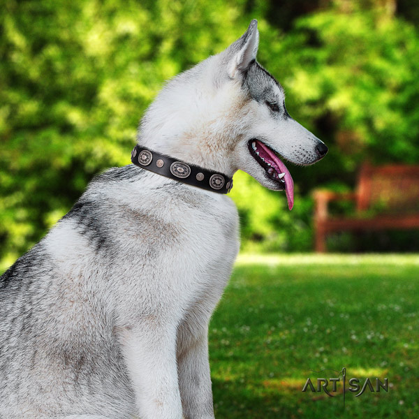 Siberian Husky impressive adorned full grain natural leather dog collar