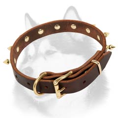 Siberian Husky dog collar with brass plated fittings