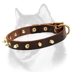 Siberian Husky dog collar with brass plated spikes decoration