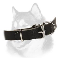 Siberian Husky dog collar with buckle style closure