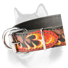 Siberian Husky fashion dog collar with shiny hardware