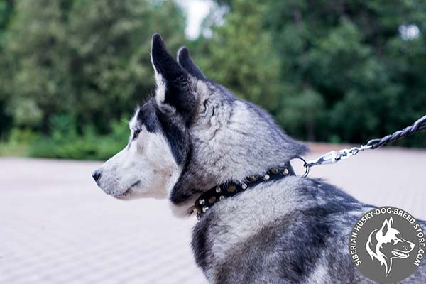 Siberian Husky black leather collar with reliable nickel plated hardware for quality control