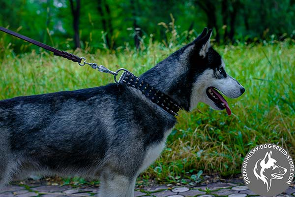 Siberian Husky black leather collar with reliable fittings for agitation training