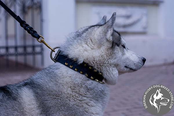 Siberian Husky black leather collar of high quality with traditional buckle for any activity