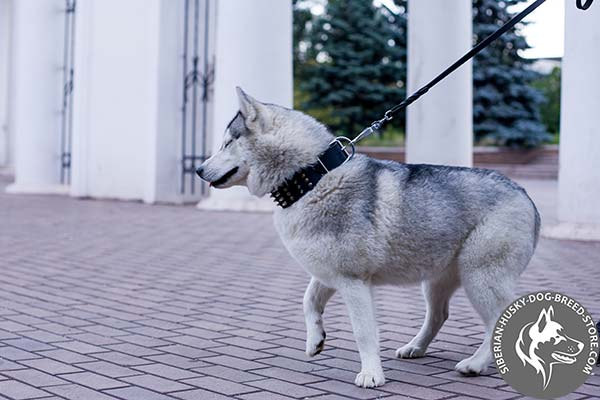 Siberian Husky black leather collar with non-corrosive fittings for professional use