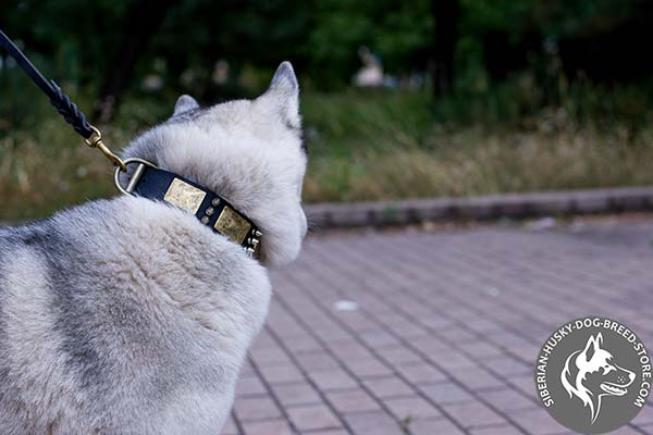 Siberian Husky black leather collar with durable brass plated hardware for perfect control