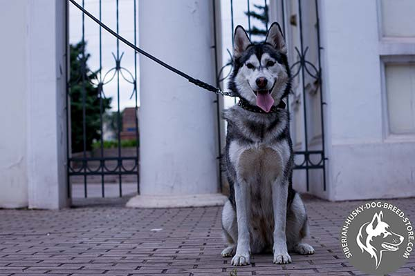 Siberian Husky black leather collar of high quality with traditional buckle for quality control