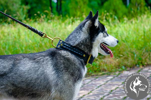 Siberian Husky black leather collar of high quality with d-ring for leash attachment for professional use