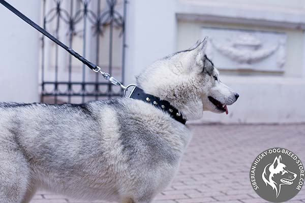 Siberian Husky black leather collar of high quality with traditional buckle for walking