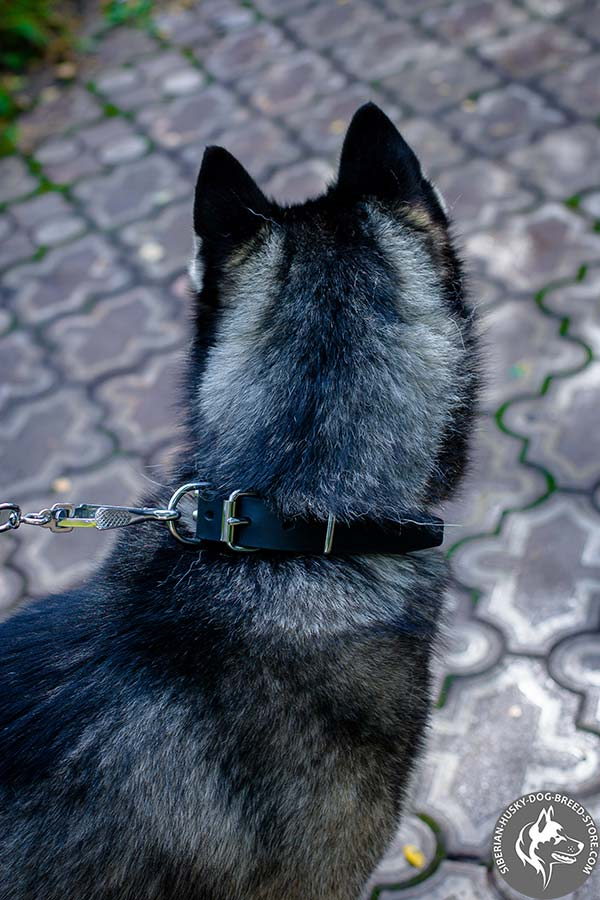 Siberian Husky black leather collar with rust-proof fittings for perfect control