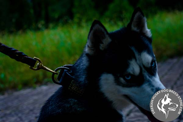 Siberian Husky brown leather collar with rust-resistant fittings for perfect control