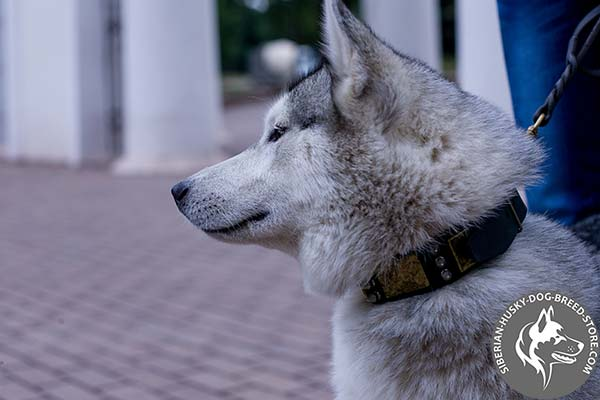 Siberian Husky black leather collar of high quality with traditional buckle for basic training