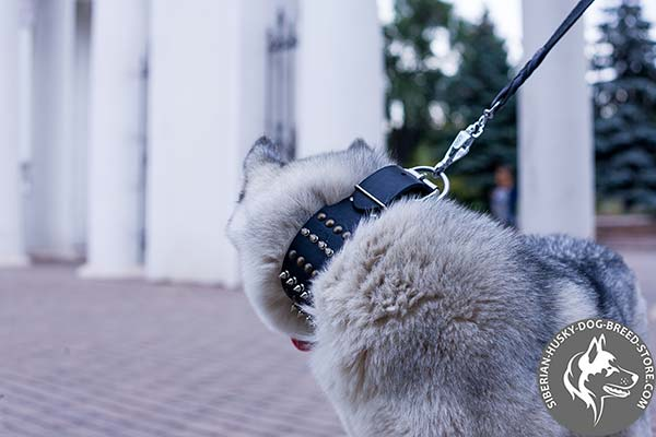 Siberian Husky black leather collar of classic design with traditional buckle for walking in style