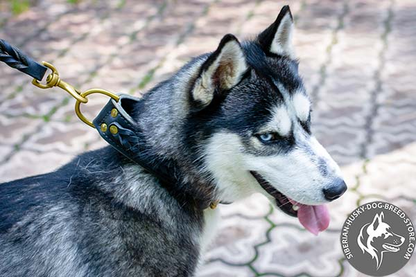 Siberian Husky black leather collar with rust-proof fittings for quality control