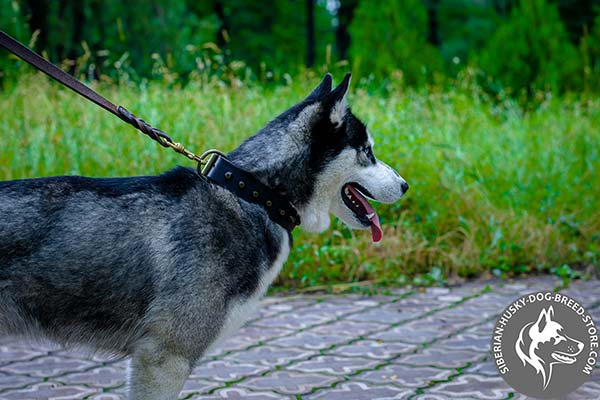 Siberian Husky black leather collar with rust-proof cones for improved control