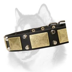 Siberian Husky leather dog collar for walking-in-style