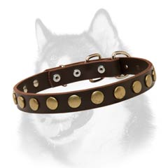 Siberian Husky leather dog collar with brass circles