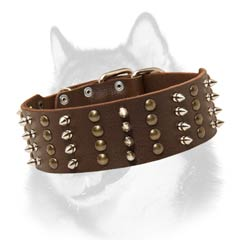 Siberian Husky leather dog collar with rust proof adornment