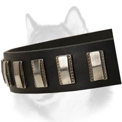 Siberian Husky leather dog collar with nickel plates