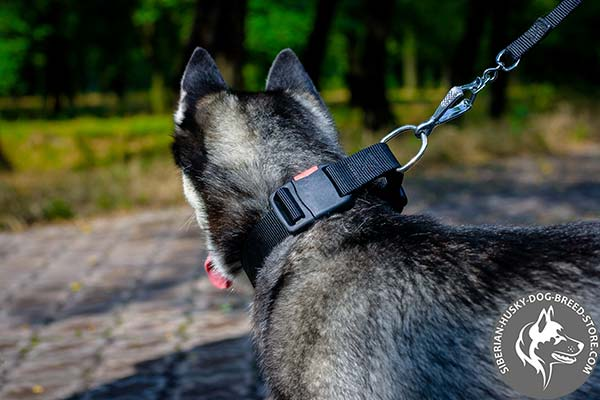 Siberian Husky nylon collar with corrosion resistant hardware for professional use