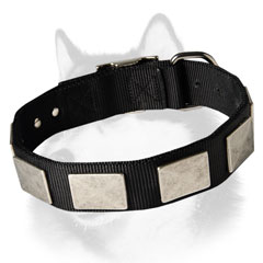 Siberian Husky nylon dog collar with large plates