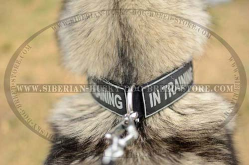 Siberian Husky nylon dog collar with removable patches