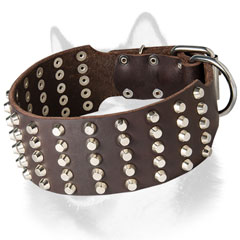 Studded leather dog collar for  Siberian Husky