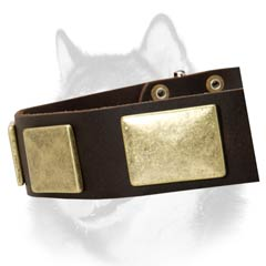 Vintage style collar for Siberian Husky