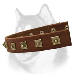 Siberian Husky leather collar decorated with riveted  studs