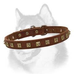 Siberian Husky leather collar narrow with square studs
