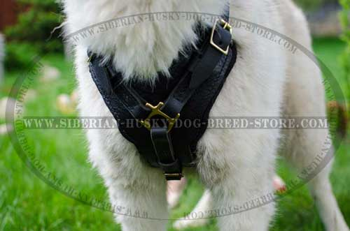 Handmade dog harness for Siberian Husky with padded chest plate
